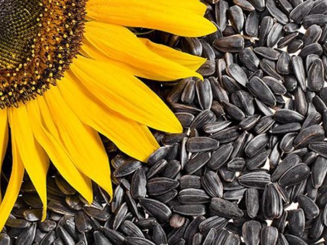 Ukrainian sunflower has risen in price in a week