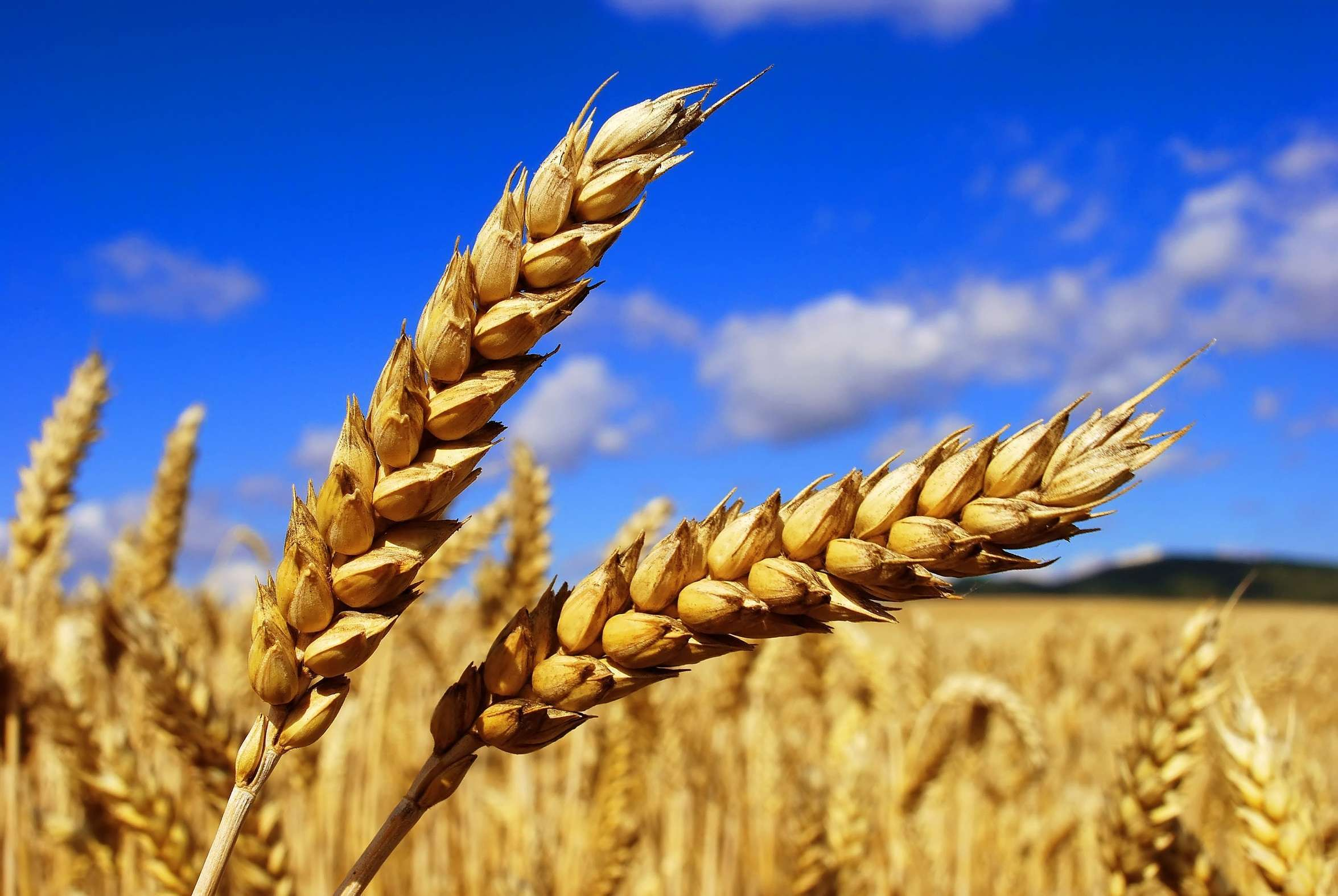 The export data of agricultural products in Ukraine for 2016