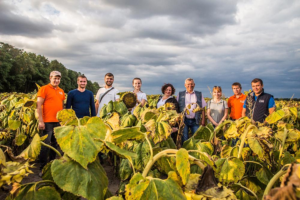 Кукуруза и подсолнух порадовали аграриев