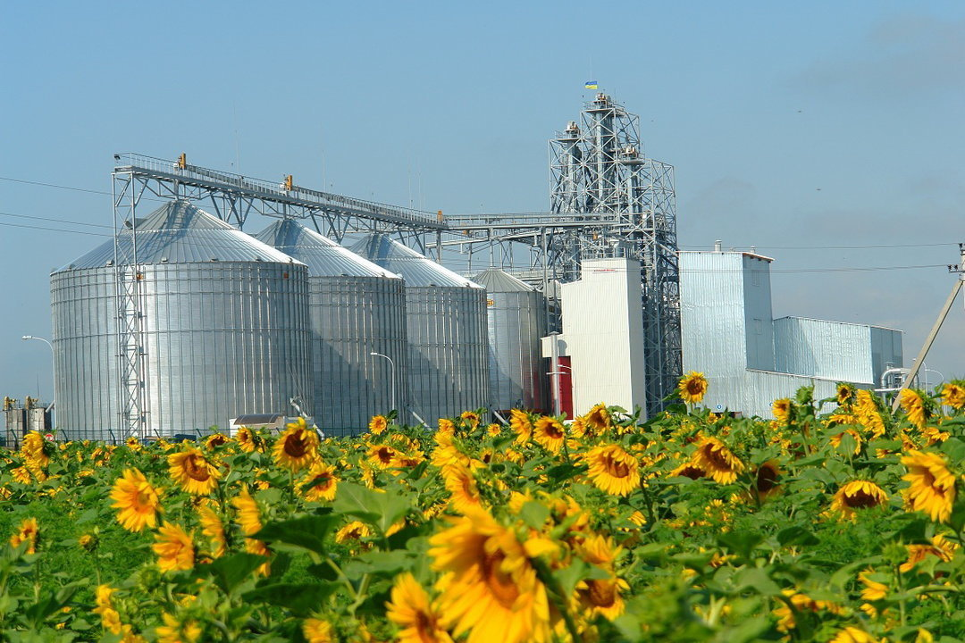 In the Ukrainian storages, nearly 7 million tons of sunflower are kept