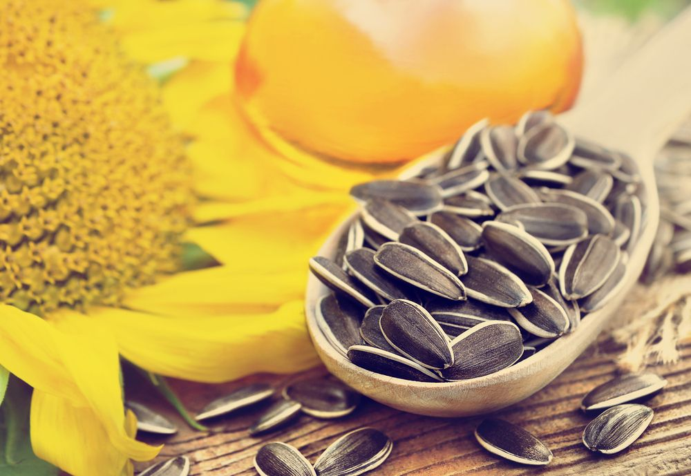 The countries of Europe increase the demand  for refined sunflower oil from Ukraine