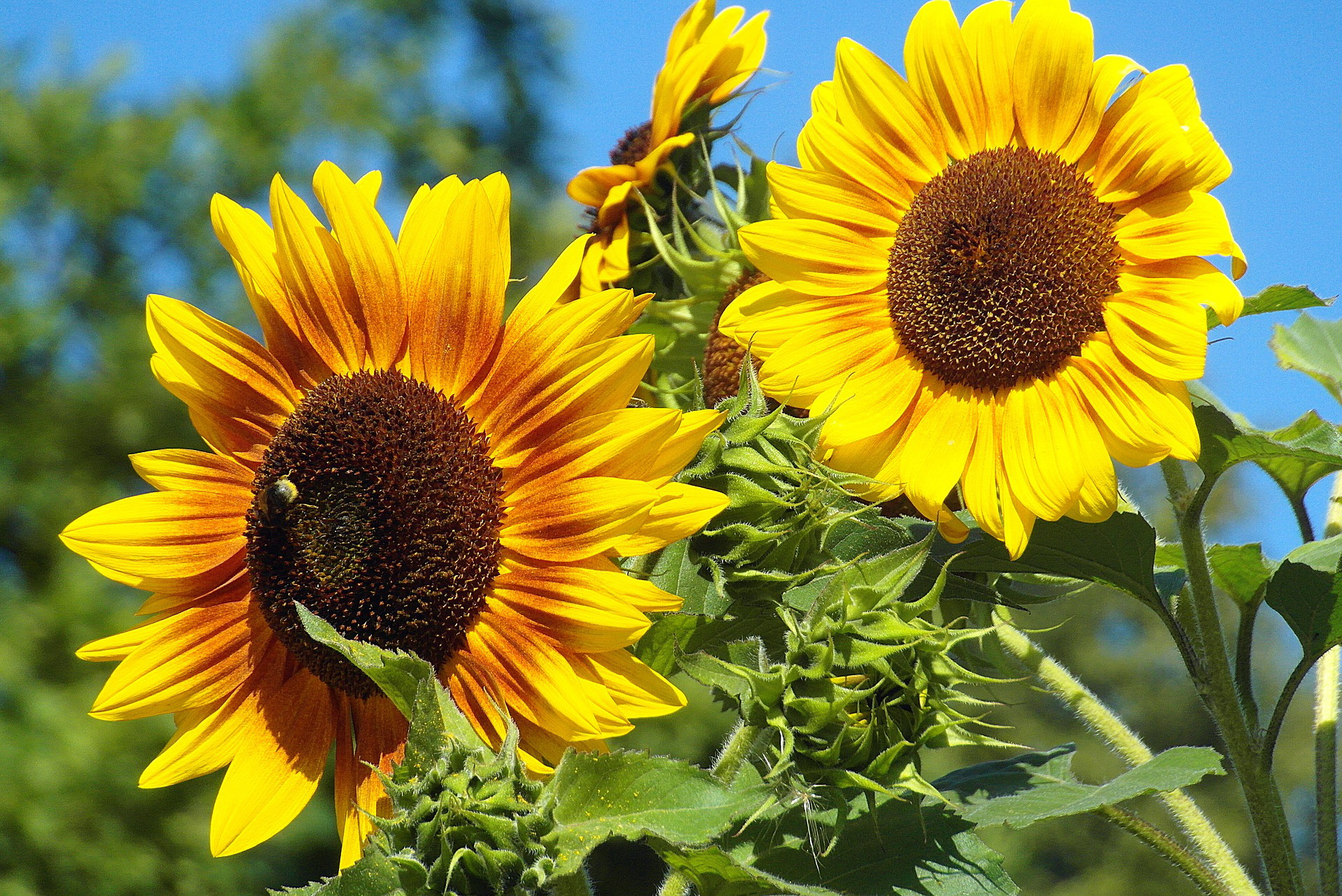 Ukraine exported a record amount of sunflower oil by tankers